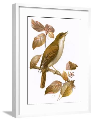 Nightingale-English-Framed Art Print
