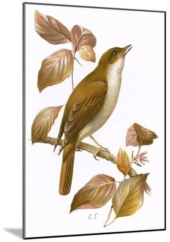 Nightingale-English-Mounted Giclee Print