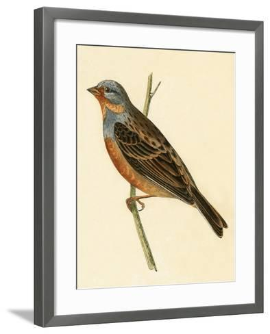 Cretzschmaer's Bunting,  from 'A History of the Birds of Europe Not Observed in the British Isles'-English-Framed Art Print