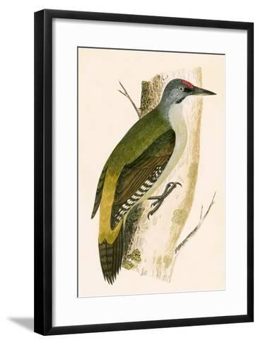 Grey Woodpecker,  from 'A History of the Birds of Europe Not Observed in the British Isles'-English-Framed Art Print
