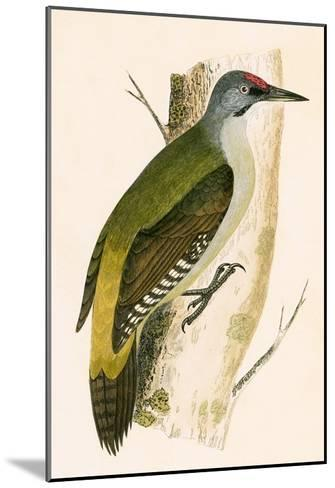 Grey Woodpecker,  from 'A History of the Birds of Europe Not Observed in the British Isles'-English-Mounted Giclee Print