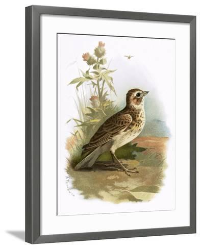 Skylark-English-Framed Art Print