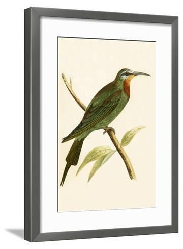 Blue Cheeked Bee Eater,  from 'A History of the Birds of Europe Not Observed in the British Isles'-English-Framed Art Print