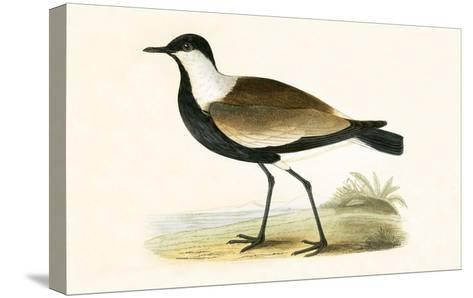 Spur Winged Plover,  from 'A History of the Birds of Europe Not Observed in the British Isles'-English-Stretched Canvas Print
