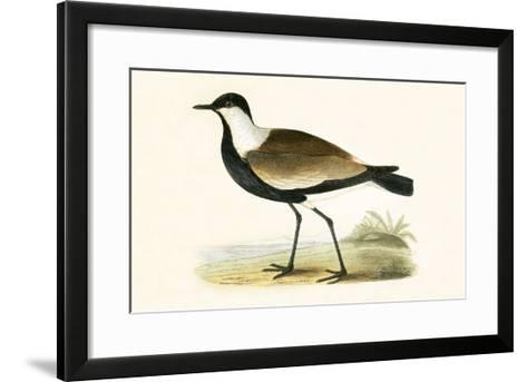 Spur Winged Plover,  from 'A History of the Birds of Europe Not Observed in the British Isles'-English-Framed Art Print