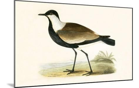 Spur Winged Plover,  from 'A History of the Birds of Europe Not Observed in the British Isles'-English-Mounted Giclee Print