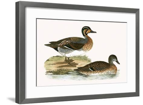 Clucking Teal,  from 'A History of the Birds of Europe Not Observed in the British Isles'-English-Framed Art Print