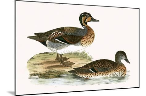 Clucking Teal,  from 'A History of the Birds of Europe Not Observed in the British Isles'-English-Mounted Giclee Print