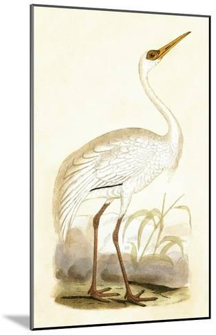 Siberian Crane,  from 'A History of the Birds of Europe Not Observed in the British Isles'-English-Mounted Giclee Print