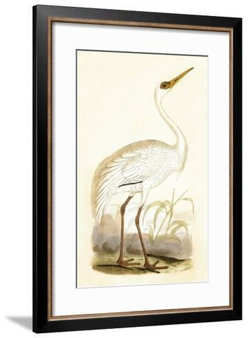 Siberian Crane,  from 'A History of the Birds of Europe Not Observed in the British Isles'-English-Framed Art Print
