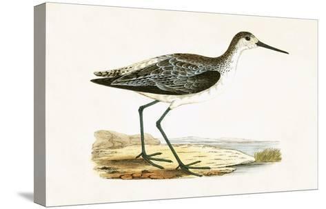 Marsh Sandpiper,  from 'A History of the Birds of Europe Not Observed in the British Isles'-English-Stretched Canvas Print