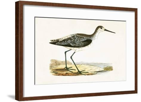 Marsh Sandpiper,  from 'A History of the Birds of Europe Not Observed in the British Isles'-English-Framed Art Print