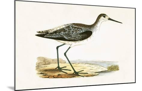 Marsh Sandpiper,  from 'A History of the Birds of Europe Not Observed in the British Isles'-English-Mounted Giclee Print