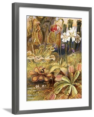 A Group of Carnivorous Plants, Illustration from 'Wonders of Land and Sea' by Graeme Williams-Theobald Carreras-Framed Art Print