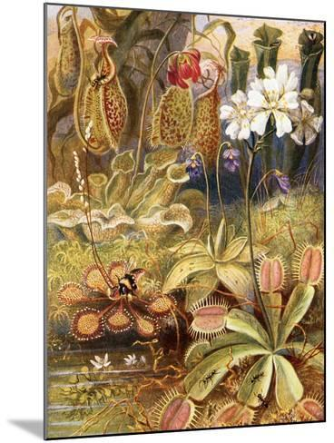 A Group of Carnivorous Plants, Illustration from 'Wonders of Land and Sea' by Graeme Williams-Theobald Carreras-Mounted Giclee Print