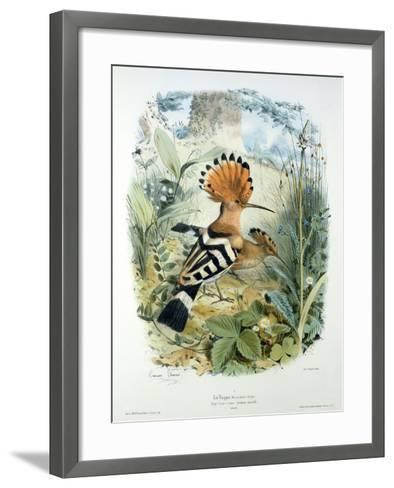 Hoopoe (Upupa Epops) (Colour Litho)-Edouard Travies-Framed Art Print