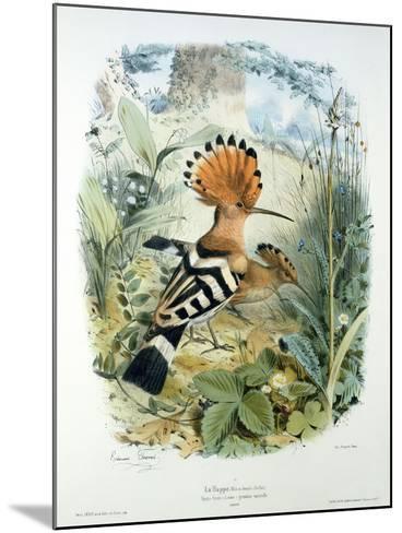 Hoopoe (Upupa Epops) (Colour Litho)-Edouard Travies-Mounted Giclee Print