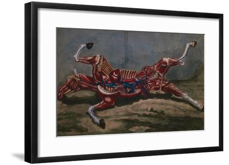 Anatomy of a Horse, from 'Cours D'Hippiatrique Ou Traite Complet De La Medecine Des Chevaux'- Harguinier-Framed Art Print