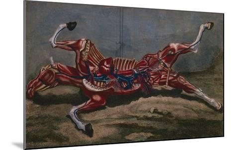 Anatomy of a Horse, from 'Cours D'Hippiatrique Ou Traite Complet De La Medecine Des Chevaux'- Harguinier-Mounted Giclee Print
