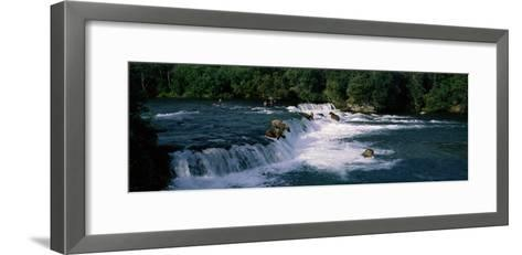 Bears Fish Brooks Fall Katmai AK--Framed Art Print