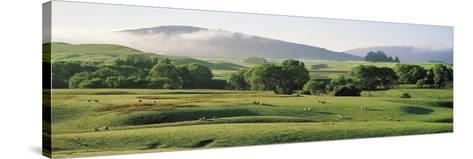 Farmland Southland New Zealand--Stretched Canvas Print