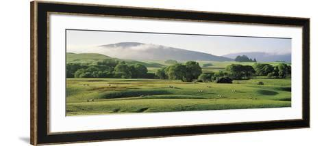 Farmland Southland New Zealand--Framed Art Print