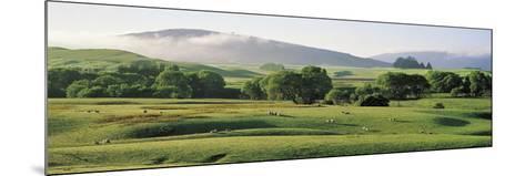 Farmland Southland New Zealand--Mounted Photographic Print