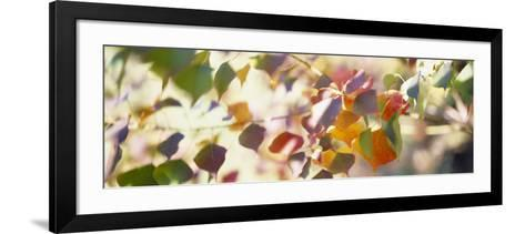 Chinese Tallow Leaves--Framed Art Print