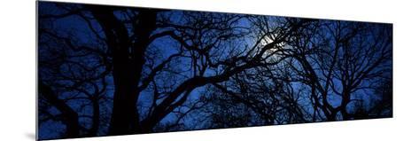 Silhouette of Oak Trees, Texas, USA--Mounted Photographic Print