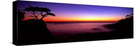 Silhouette of Lone Cypress Tree on a Cliff, Pebble Beach, California--Stretched Canvas Print