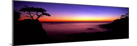 Silhouette of Lone Cypress Tree on a Cliff, Pebble Beach, California--Mounted Photographic Print