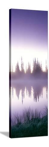 Reflection of Trees in a Lake, Mt Rainier, Mt Rainier National Park, Pierce County, Washington S...--Stretched Canvas Print