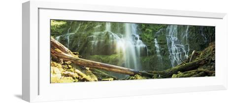 Waterfall in a Forest, Proxy Falls, Three Sisters Wilderness Area, Willamette National Forest, L...--Framed Art Print