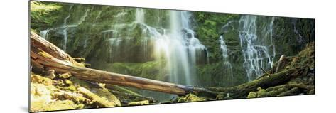 Waterfall in a Forest, Proxy Falls, Three Sisters Wilderness Area, Willamette National Forest, L...--Mounted Photographic Print