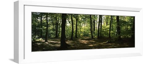 Beech Trees in a Forest, Viennese Forest, Lower Austria, Austria--Framed Art Print