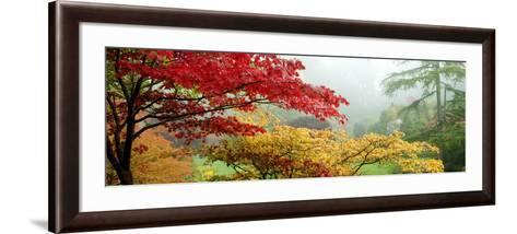 Trees in a Garden, Butchart Gardens, Victoria, Vancouver Island, British Columbia, Canada--Framed Art Print