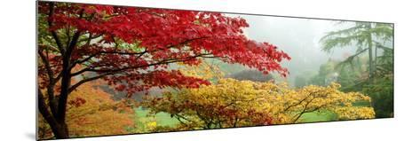 Trees in a Garden, Butchart Gardens, Victoria, Vancouver Island, British Columbia, Canada--Mounted Photographic Print
