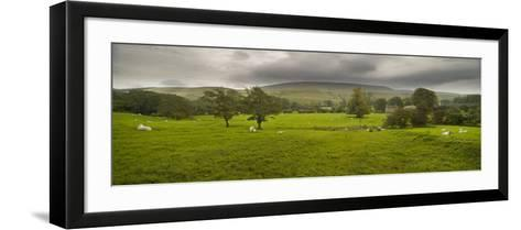 Cattle in a Meadow, Pendle Hill, Clitheroe, Lancashire, England--Framed Art Print