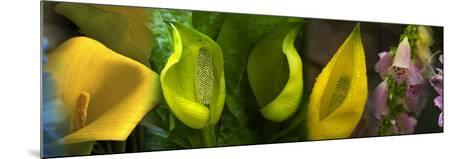 Multiple Images of Flowers--Mounted Photographic Print