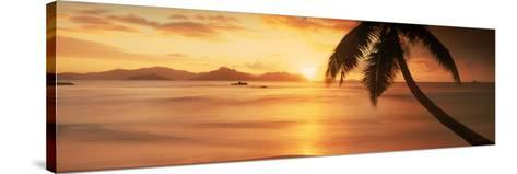Silhouette of a Palm Tree on the Beach at Sunset, Anse Severe, La Digue Island, Seychelles--Stretched Canvas Print