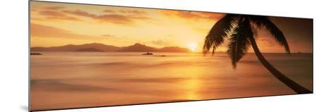 Silhouette of a Palm Tree on the Beach at Sunset, Anse Severe, La Digue Island, Seychelles--Mounted Photographic Print