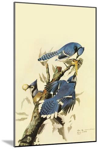 Blue Jay-John James Audubon-Mounted Art Print