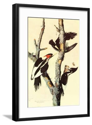 Ivory-Billed Woodpecker-John James Audubon-Framed Art Print