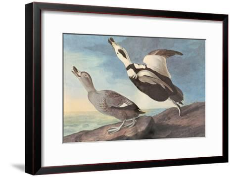 Labrador Duck-John James Audubon-Framed Art Print