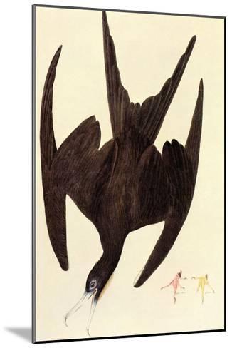 Magnificent Frigate Bird-John James Audubon-Mounted Art Print