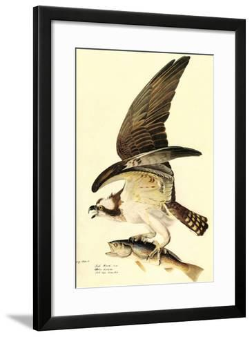 Osprey-John James Audubon-Framed Art Print