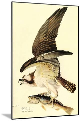 Osprey-John James Audubon-Mounted Art Print