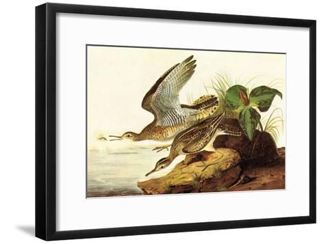 Upland Plover-John James Audubon-Framed Art Print