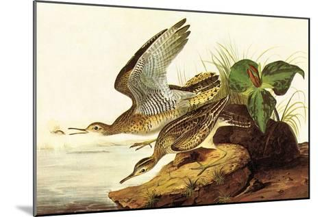 Upland Plover-John James Audubon-Mounted Art Print