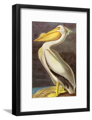 White Pelican-John James Audubon-Framed Art Print